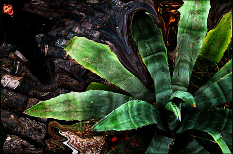 Personalagave